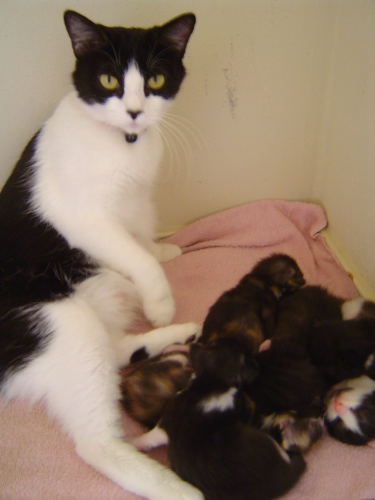 Persephone and her kittens (2)