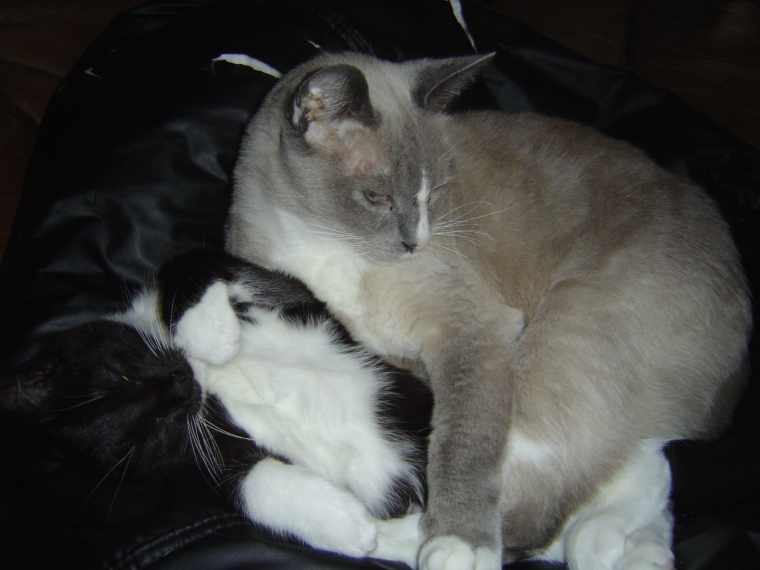 Smokey and Vibur, cuddling (2)
